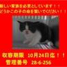 ☆可愛い可愛い子猫ちゃん3兄弟☆