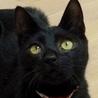 甘えん坊でビビリの黒猫ノワールちゃん