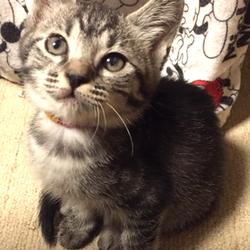 第14回 きーちゃんち 「猫の譲渡会」