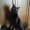 下痢ピー黒猫くろ豆ちゃん サムネイル2