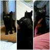 ありがとうございます保健所から保護の黒猫姉妹