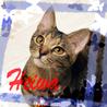 キジトラ5ヶ月♡猫初心者向け丸顔美猫平和