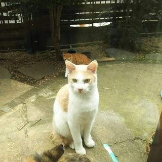 野良猫の子供です。薄茶白