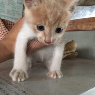 子猫の里親 大切にしてくださる方お願いします