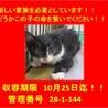 命の期限10月25日! かわいい子猫ちゃんです!