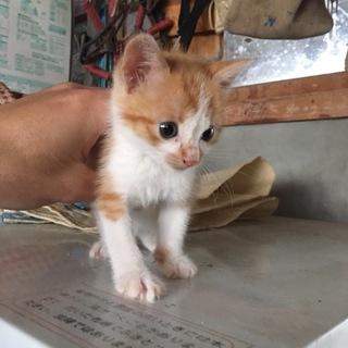 子猫の里親 大切にしてくださる方お願いします。