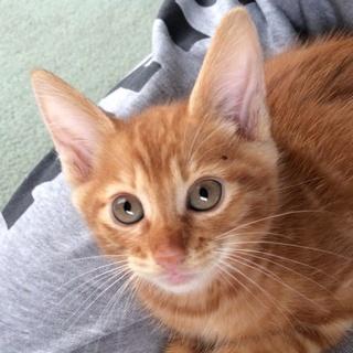 生後2ヶ月ほどの子猫ちゃんです