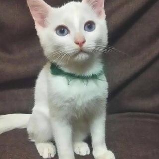 白猫男の子☆圭くん