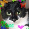 黒白♡丸顔メス1歳♪猫初心者向け翡翠色の瞳なな
