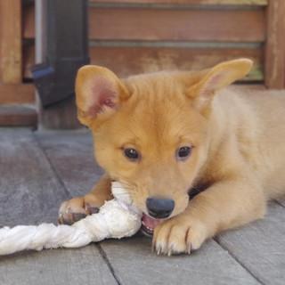 シェルターで生まれた生後2ヶ月の元気な子犬!