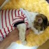 1ヶ月以上の介護で、復活した老猫