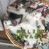 6月末産まれ、子猫兄妹の里親さん募集です。