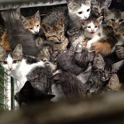 NPO法人 動物愛護団体エンジェルズ 猫の譲渡会 サムネイル2