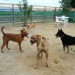 保護犬・猫の譲渡相談会