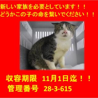 期限11月1日迄!おひげ顔の猫ちゃんです(^^♪