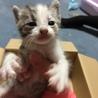 珍しい色の可愛い子猫