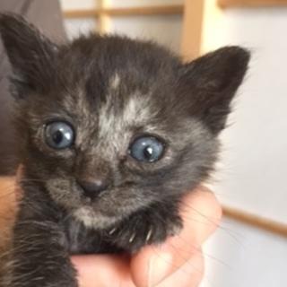 1,5ヶ月くらいの子猫ちゃん