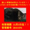 期限11月1日迄!お目目クリクリの猫ちゃん☆