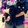 飼主放棄の12歳 長毛黒猫ちゃん
