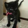 黒猫赤ちゃん