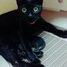 可愛い黒猫ちゃん!