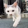 【里親決定!】天才猫ジーニャスくん