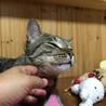 イケメンキジ猫さんの家族を探してます サムネイル3