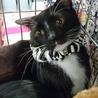 マイペースな白黒子猫男爵君!!