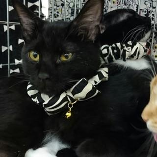 やんちゃボーズな黒子猫コリンキー君!!