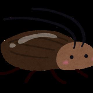 デュビア成虫♂♀約55匹おまけ付き