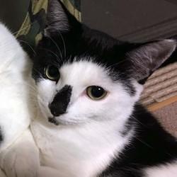 保護猫ビッツの生い立ち