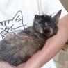 浄子3ヶ月齢メス、愛嬌たっぷり超人懐こい女の子 サムネイル3