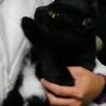 人懐っこい黒猫です。