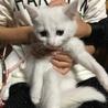♪イケメン白猫(ブルーアイ)♪