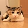 おっとり三毛猫ケイちゃん! サムネイル2