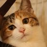 おっとり三毛猫ケイちゃん! サムネイル5