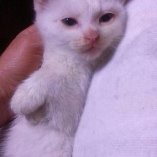 真っ白の可愛い白ちゃん1・天使な5匹兄弟