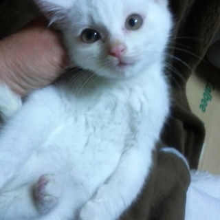 天使な5匹兄弟・真っ白の白猫2