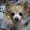 要介護者がいる家庭に保護犬を迎えたい