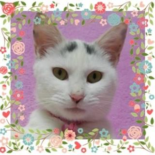 甘えん坊で天井眉の可愛い白猫ちゃん♪♪