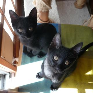 ◎仲良し!!黒子猫きょうだい3ヶ月◎