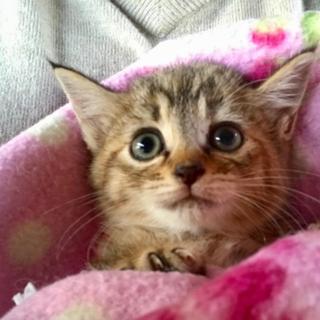 くりくりお目目のポプリちゃん♀9月生まれ