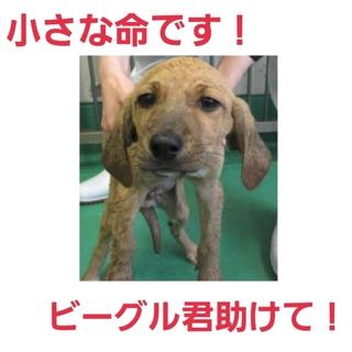 小さな命には期限があります①仔犬くんを助けて!