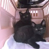 仲良しの黒猫兄弟♪ 二匹一緒に!