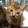 【急募】可愛い子猫2匹(♂と♀)の里親さん募集 サムネイル2