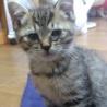 【急募】可愛い子猫2匹(♂と♀)の里親さん募集 サムネイル3