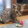 【急募】可愛い子猫2匹(♂と♀)の里親さん募集 サムネイル4