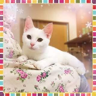 とても甘えっこな男の子 先住猫OK