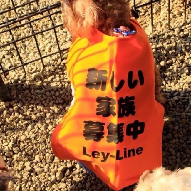 LEY-LINEのカバー写真