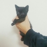 1か月半くらい黒 子猫④こつぶ